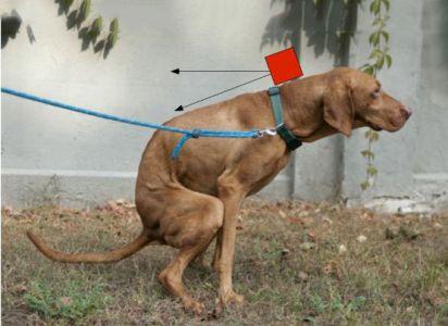 狗狗便便追踪器图片